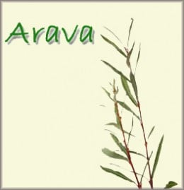 two willow branches (aravot)