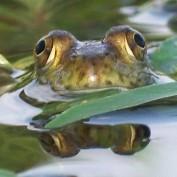 frogyfish profile image