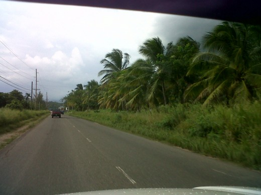 These coconut trees do something for this roadside.