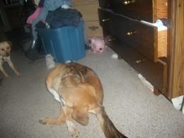 dog... ewwwww