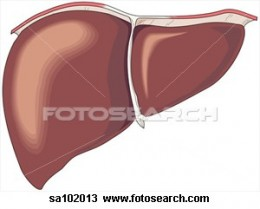 The liver is one of the target organ of Insulin
