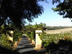Castoro Cellars Winery in Templeton, California