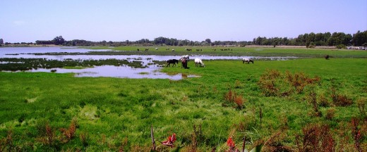 The lake in El Rocio is home to Flamingoes and MOSQUITOES