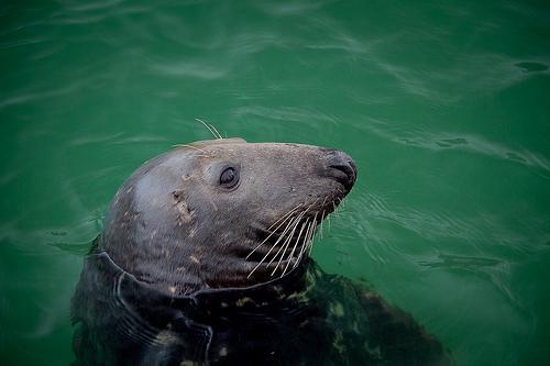 Newquay Harbour Seals.    Photo by: Dexla Media