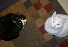 They need an automatic cat feeder:  Feed me!!!  Courtesy Flickr, Per Ola Wiberg ~ Powi