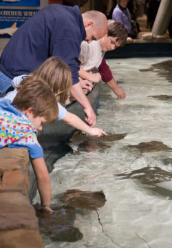 Petting and interactive displays teacher youngsters about endangered species and conservation.     http://en.wikipedia.org/wiki/Georgia_Aquarium