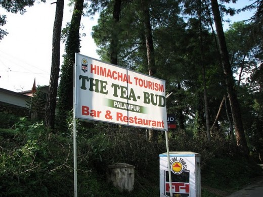 The Tea Bud Bar and Restaurant of Palampur Himachal Pradesh