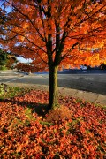 O Fall Glorious: Autumn Poems and Photographs