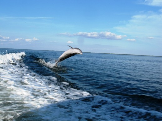 Amazing wild life you can watch the bottlenose dolphins play and feed. The island measures 12 miles long and 5 miles across.