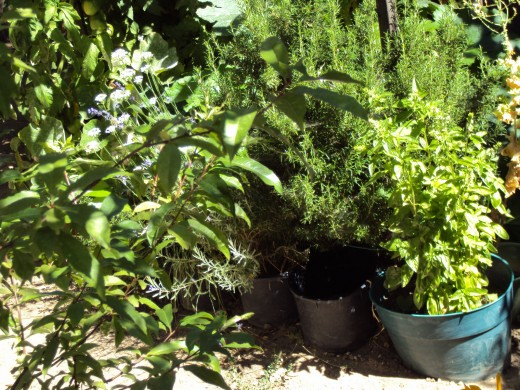 A group of potted plants are congregated in the garden.