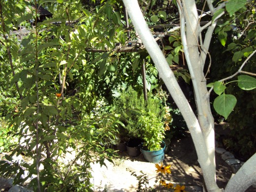 Apple tree off to the side with a view of the potted plants.