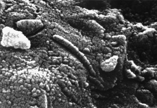 Fossil Microorganisms.