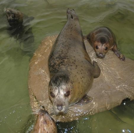 Seals at the Seaside Aquarium