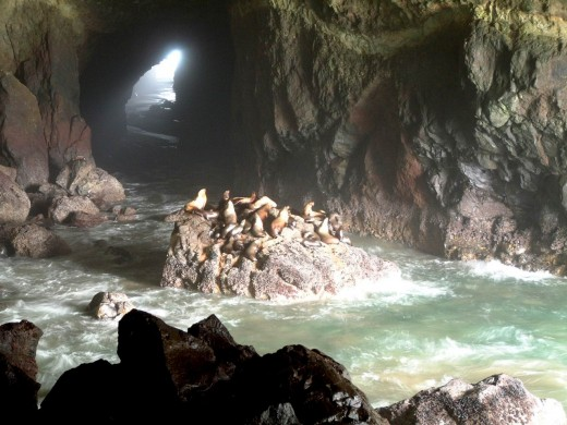 Sea Lion Caves. Florence,OR