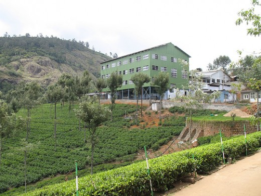 Tea Factory @ Coonoor