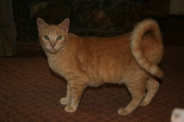 "Rescued Cat named Pumpkin, aka ""Hissin'& Spitin' & Carrying On"""