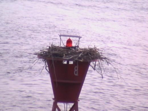 The Guest aka Bird on a Nest (IAA)