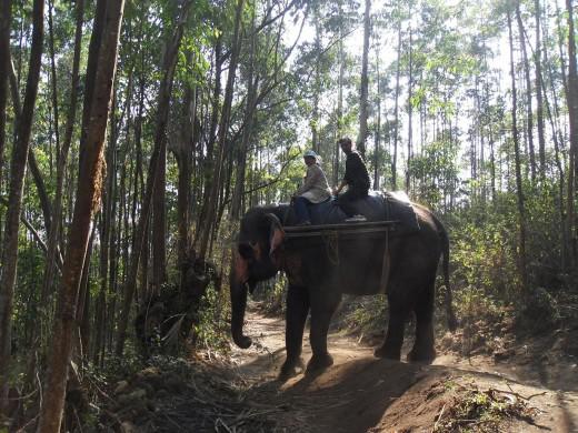 Elephant Safari, Munnar