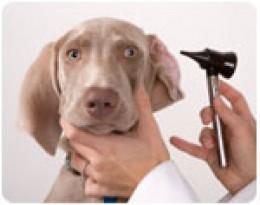 Ear Car for Dogs