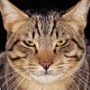 PetMemorialWorld profile image