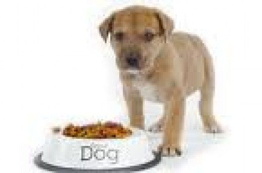 Puppy standing by their food bowl