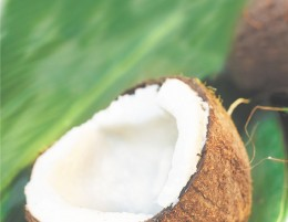 Coconut palms are sometimes called the 'tree of life'.