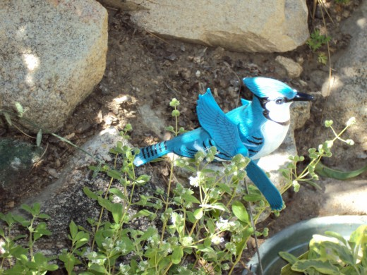 A blue jay mobile sits in the garden.