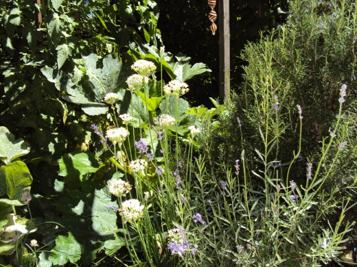 Herbs and flowers would be lovely to sketch on this summer's day in the garden.