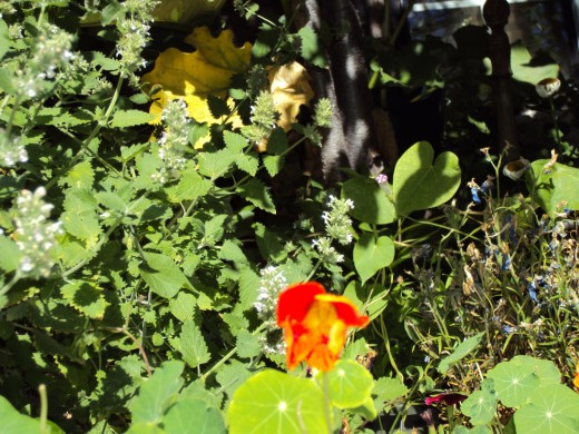 Nasturtium in reds and orange always inspire me.