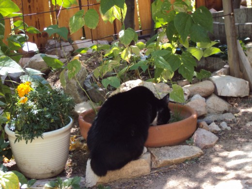 A picture of Anastasia drinking water in the garden.