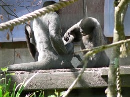 The Monkey Sanctuary, Looe, Cornwall Photo by: Alistair Young