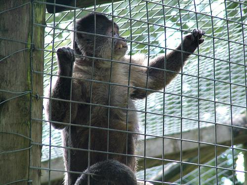 The Monkey Sanctuary, Looe, Cornwall Photo by: Steve Berry