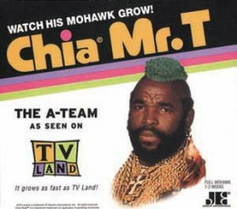 Mr T Chia Pet
