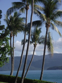 Whitsundays: Day Tours by Ferry from Airlie Beach - Daydream Island