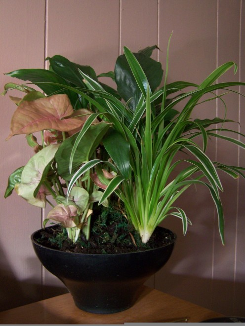Purchase Aquarium and Bog Plants Online, at Pet Stores or through a Google Shopping Search.