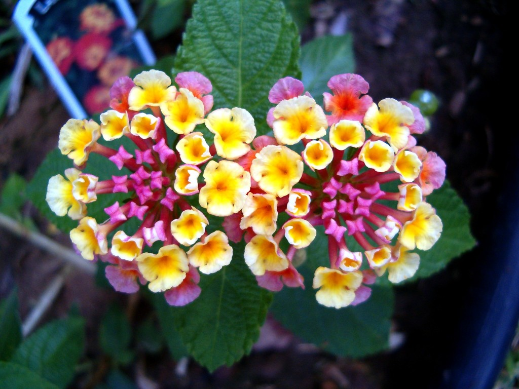 Flowers to Attract Butterflies to Your Garden