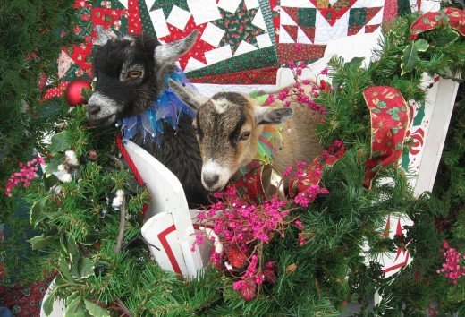 Daisy & Lily were the stars of our '07 Holiday Card!