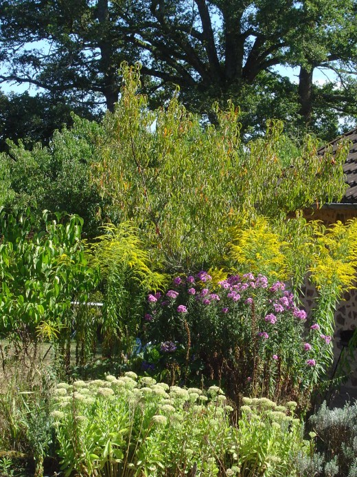 The autumn garden is pretty and provides food for the birds in winter.
