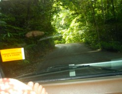 Narrow winding road leads deep into the Rainforest.