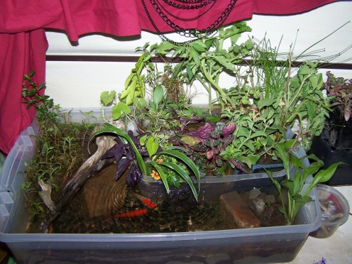 An Indoor Habitat for Small Turtles. Turtles Eat Vegetation, Insects, Fish and Carrion. Delicious Goldfish Optional, Ha!