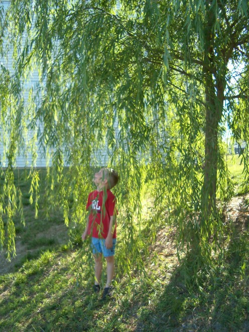 My son and a lovely weeping willow tree.  One of my favorite trees ever.
