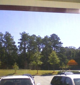 View from the dining room.