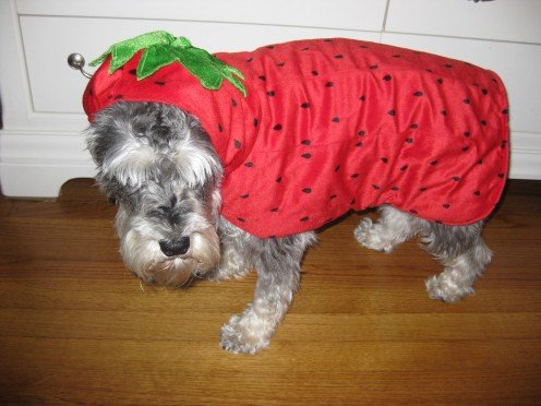 Ready for my Halloween closeup in my strawberry costume