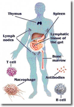 Immune Cells and Organs