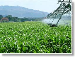 Mealie land (Maize)