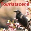 touristscene profile image