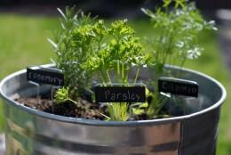Economic Gardening Ideas - Container gardening in a garden pail