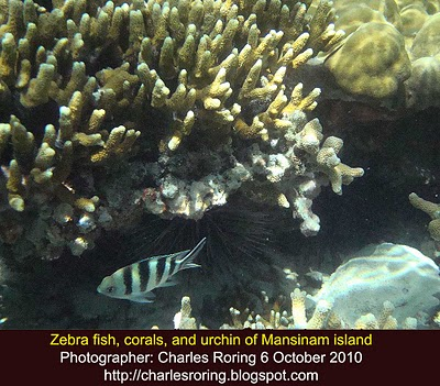 Corals, Zebra Fish and Urchin