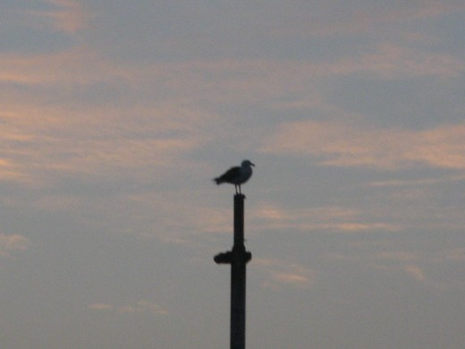 A seagull perched in Newport Harbor