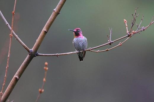 Christmas Bird Count, Groveland 2007.